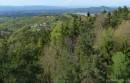 Wald Steiermark