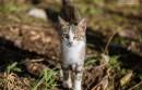 Kastrationspflicht Katzen