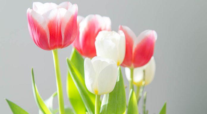 Muttertag Blumen