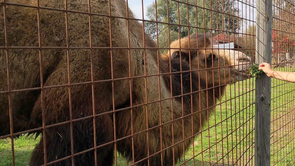 Kamel Tierpark Preding