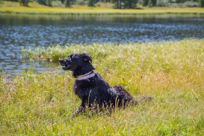 Hundeurlaub