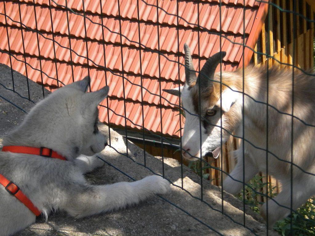 Tierschutzpreis Tierfoto